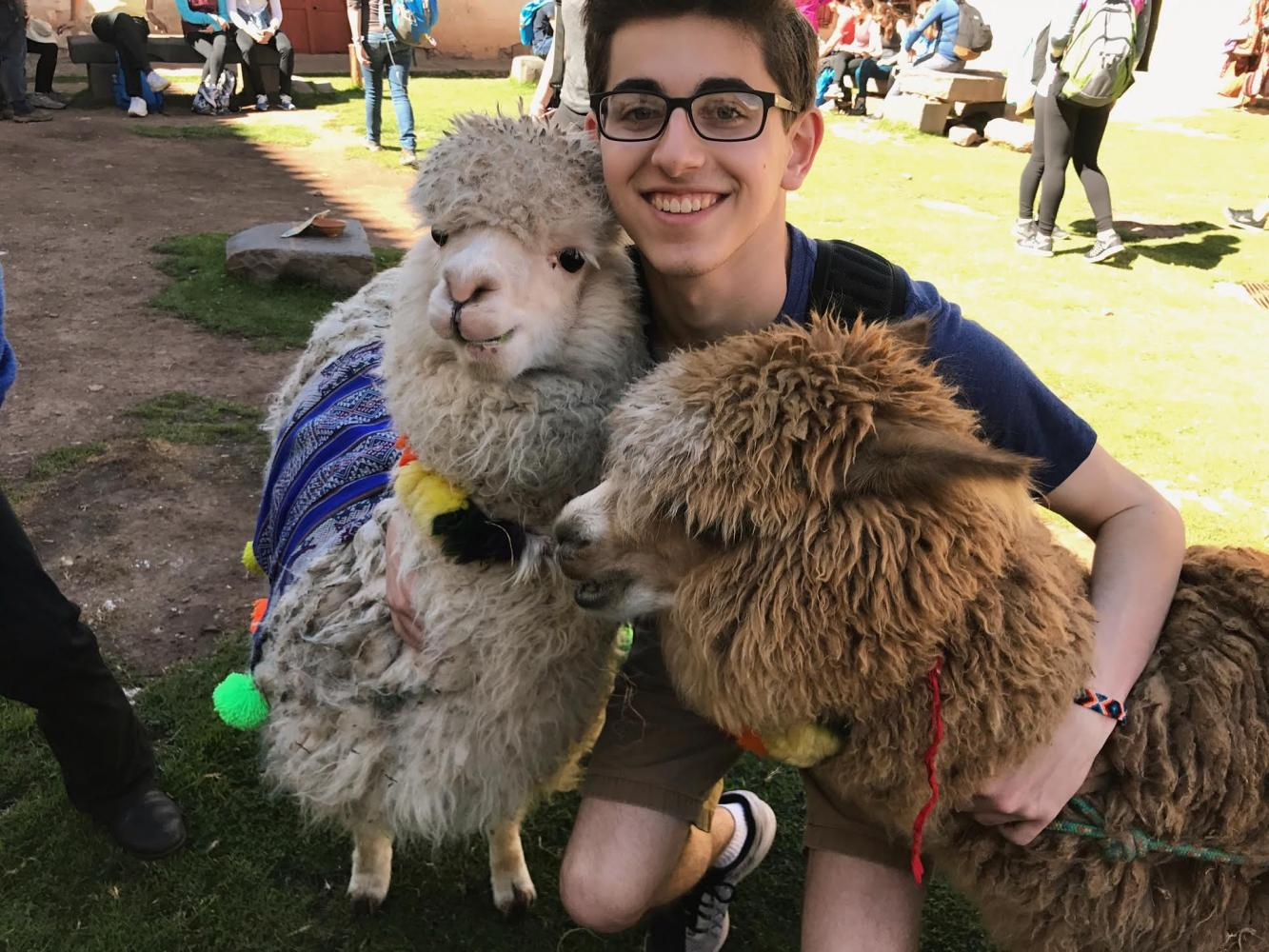 Senior Rudy Malcolm poses with two alpacas in one of the farms on the countryside of Cusco.